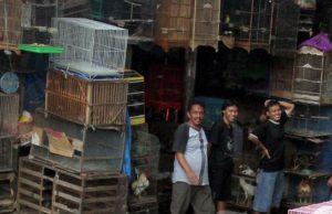 Pasar burung batam