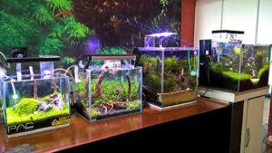 toko aquarium batam