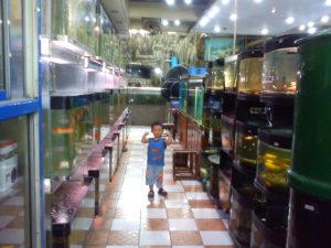 toko ikan hias di batam