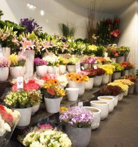 toko bunga mawar segar dan hidup di batam